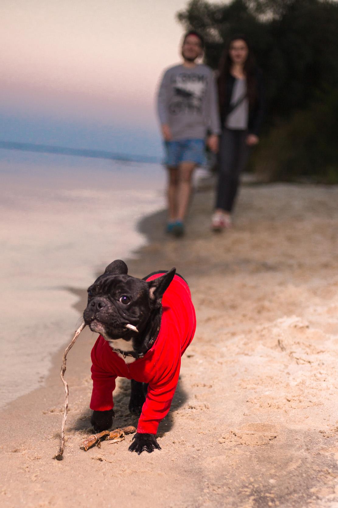 с собакой по пляжу
